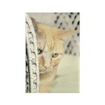 Yellow Tabby Cat Rectangle Magnet (10 pack)