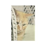 Yellow Tabby Cat Rectangle Magnet (100 pack)