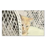 Yellow Tabby Cat Sticker (Rectangle)