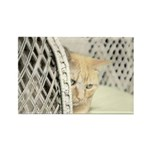 Yellow Tabby Cat Rectangle Magnet