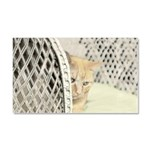 Yellow Tabby Cat Car Magnet 20 x 12