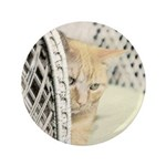 Yellow Tabby Cat 3.5