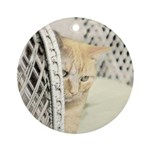 Yellow Tabby Cat Round Ornament