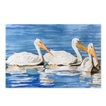 White Pelicans Postcards (Package of 8)