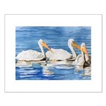 White Pelicans Small Poster