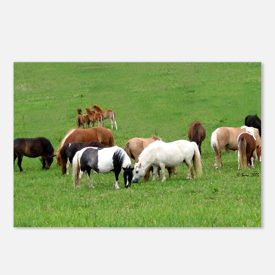 Mini Horses in Pasture Postcards (Package of 8)