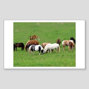 Mini Horses in Pasture Rectangle Sticker