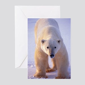 Big Boy Polar Bear Greeting Cards