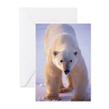 Polar bear Greeting Cards (20 Pack)