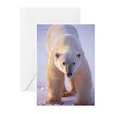 Polar bear Greeting Cards (20 Pack)