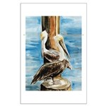 Brown Pelicans Large Poster