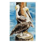 Brown Pelicans Postcards (Package of 8)