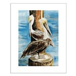 Brown Pelicans Small Poster