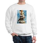 Brown Pelicans Sweatshirt