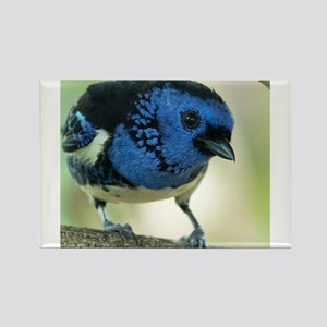 Turquoise Tanager Magnets