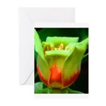 Tulip Poplar Greeting Cards (Pk of 10)