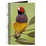 Gouldian in a Gum Tree Journal