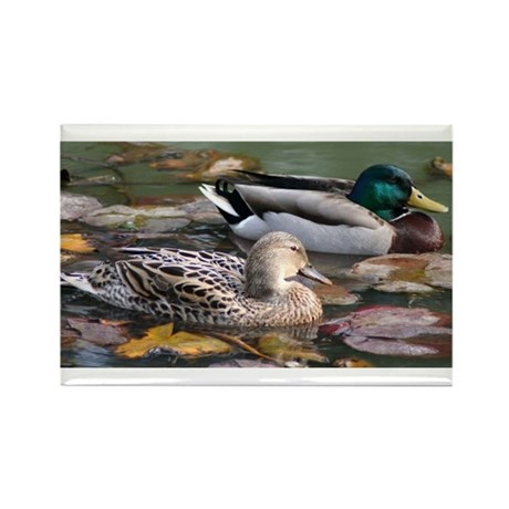 Mallard Couple Rectangle Magnet