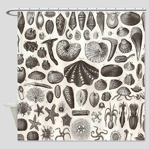 biology science illustration seashe Shower Curtain