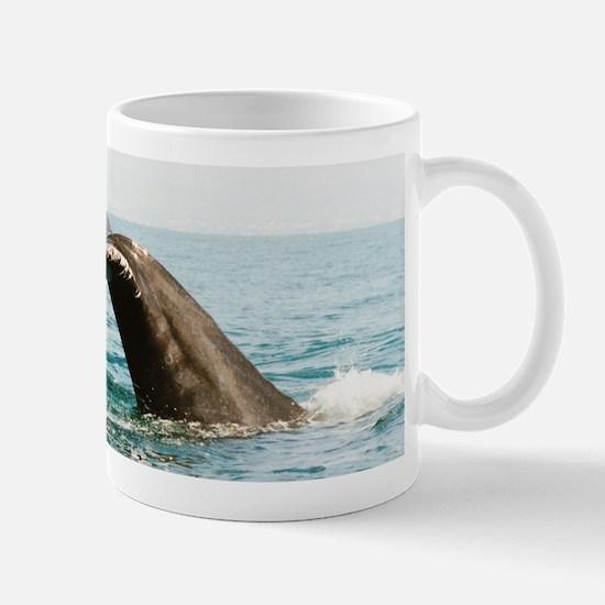 Whalewhatching, Mexico Mug