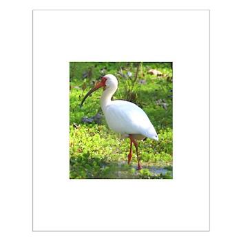 White Ibis Small Poster