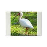 White Ibis Rectangle Magnet