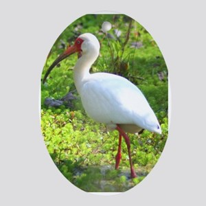 White Ibis Oval Ornament
