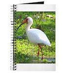 White Ibis Journal