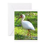 White Ibis Greeting Cards (Pk of 10)