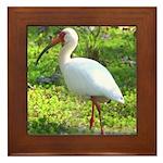 White Ibis Framed Tile