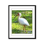 White Ibis Framed Panel Print