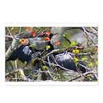 Anhinga Postcards (Package of 8)