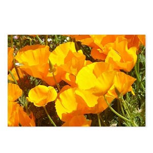 California poppy postcards cafepress mightylinksfo