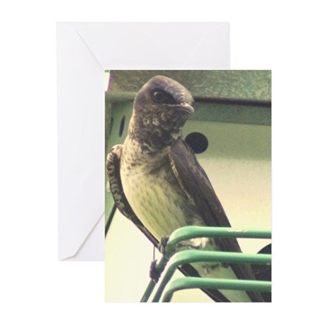 Purple Martin Greeting Cards (Pk of 20)