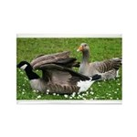 Odd Goose Couple Rectangle Magnet