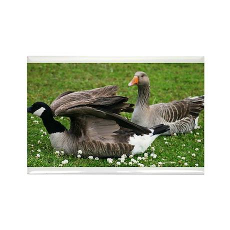 Odd Goose Couple Rectangle Magnet