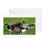 Odd Goose Couple Greeting Cards (Pk of 20)