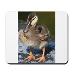 Mallard Duckling Mousepad