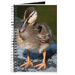 Mallard Duckling Journal