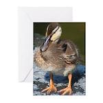 Mallard Duckling Greeting Cards (Pk of 20)
