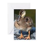 Mallard Duckling Greeting Cards (Pk of 10)