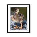 Mallard Duckling Framed Panel Print