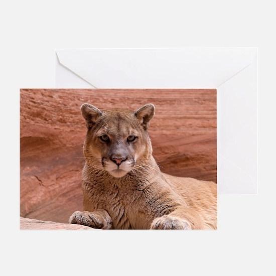 Cougar Greeting Card
