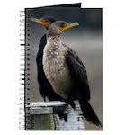 Cormorants Journal