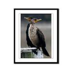Cormorants Framed Panel Print