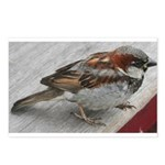 House Sparrow Postcards (Package of 8)