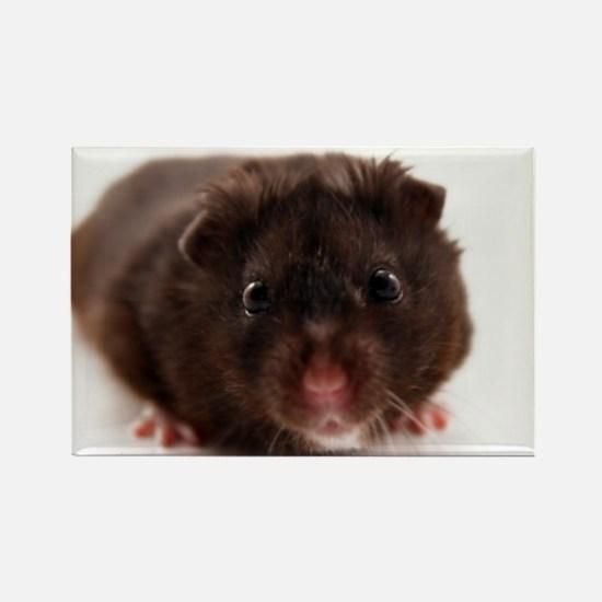Unique Hamsters Rectangle Magnet