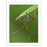 Wheel Bug Nymph Small Poster