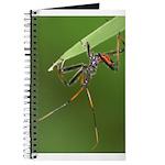 Wheel Bug Nymph Journal