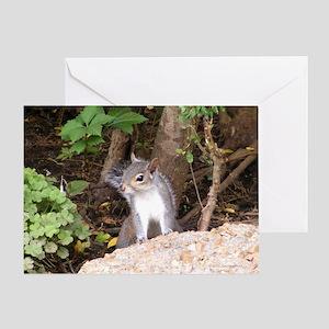 Pretty Squirrel Greeting Card